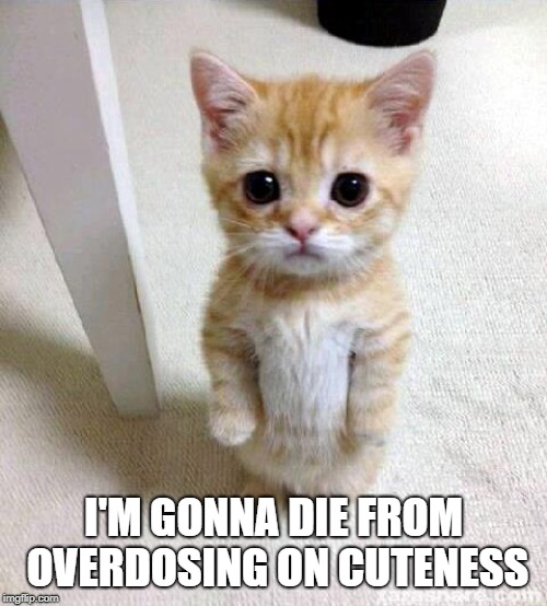 So Much Cute | I'M GONNA DIE FROM OVERDOSING ON CUTENESS | image tagged in memes,cute cat | made w/ Imgflip meme maker
