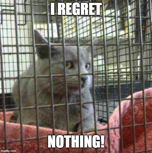 cat jail |  I REGRET; NOTHING! | image tagged in no regrets,cats | made w/ Imgflip meme maker