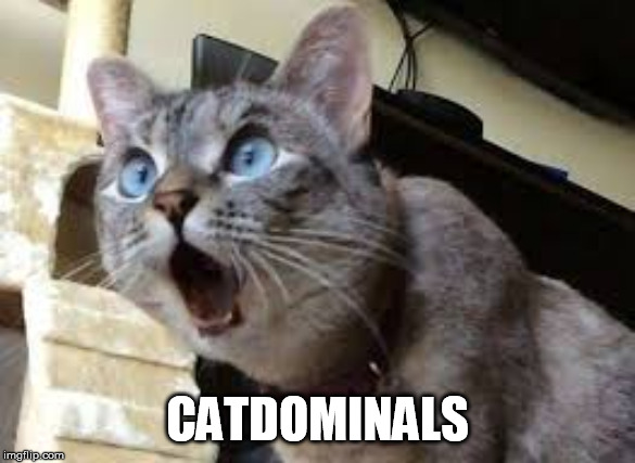 Surprised cat | CATDOMINALS | image tagged in surprised cat | made w/ Imgflip meme maker