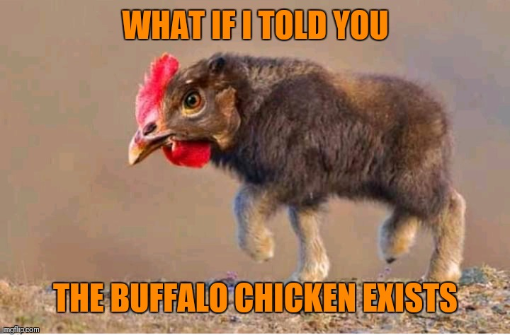Buffalo Chicken | WHAT IF I TOLD YOU THE BUFFALO CHICKEN EXISTS | image tagged in memes,buffalo chicken,food | made w/ Imgflip meme maker