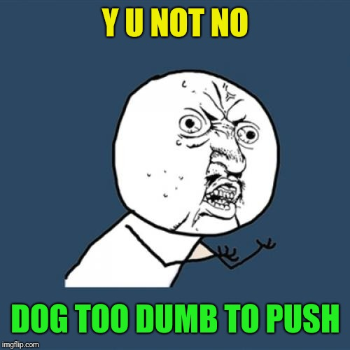 Y U No Meme | Y U NOT NO DOG TOO DUMB TO PUSH | image tagged in memes,y u no | made w/ Imgflip meme maker