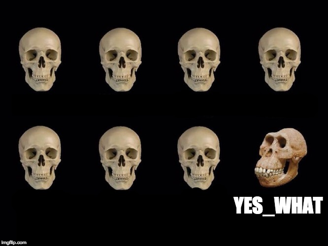 YES_WHAT | image tagged in skulls of truth | made w/ Imgflip meme maker