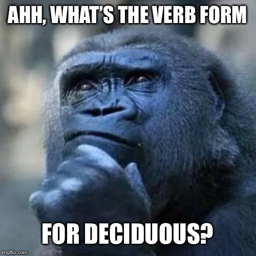 Thinking ape | AHH, WHAT'S THE VERB FORM FOR DECIDUOUS? | image tagged in thinking ape | made w/ Imgflip meme maker