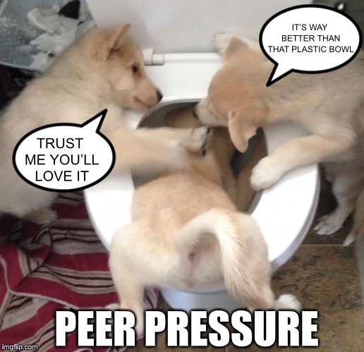When Good Dogs Go Bad | TRUST ME YOU'LL LOVE IT IT'S WAY BETTER THAN THAT PLASTIC BOWL PEER PRESSURE | image tagged in doggo waterboarding,dogs,cute animals,memes,funny,doggo | made w/ Imgflip meme maker