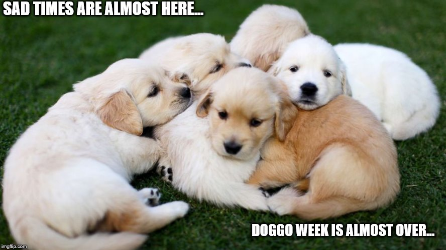 Sad times are almost here... | SAD TIMES ARE ALMOST HERE... DOGGO WEEK IS ALMOST OVER... | image tagged in puppies,cute,doggo,doggo week,pupper,meme | made w/ Imgflip meme maker