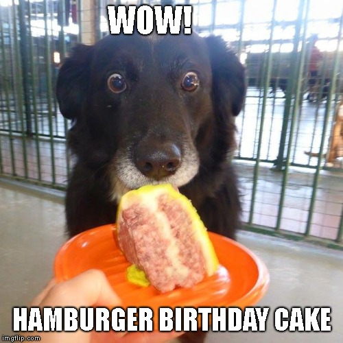 How to Make a Dog's Birthday Special | WOW! HAMBURGER BIRTHDAY CAKE | image tagged in doggo week,good dog,doggy | made w/ Imgflip meme maker