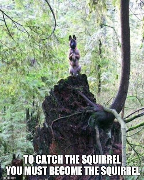 Become the squirrel | TO CATCH THE SQUIRREL YOU MUST BECOME THE SQUIRREL | image tagged in funny squirrel,become the squirrel | made w/ Imgflip meme maker