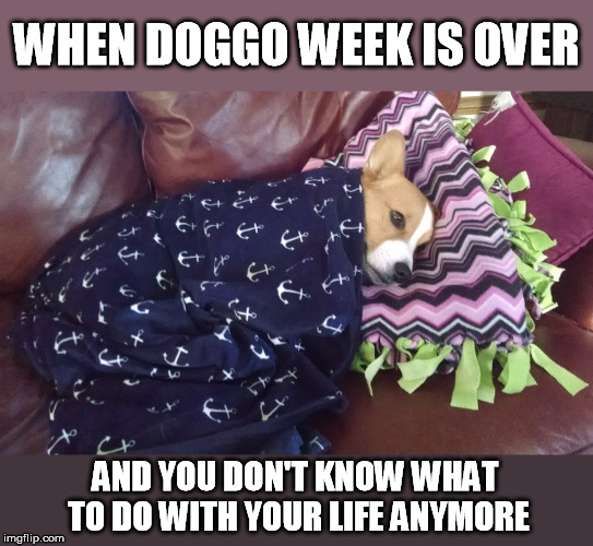 Cheers to our wonderful hosts 1forpeace and Blaze_the_Blaziken for the fun! | WHEN DOGGO WEEK IS OVER AND YOU DON'T KNOW WHAT TO DO WITH YOUR LIFE ANYMORE | image tagged in doggo week,1forpeace,blaze the blaziken,thank you,cheers | made w/ Imgflip meme maker