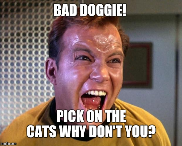 Captain Kirk Screaming | BAD DOGGIE! PICK ON THE CATS WHY DON'T YOU? | image tagged in captain kirk screaming | made w/ Imgflip meme maker