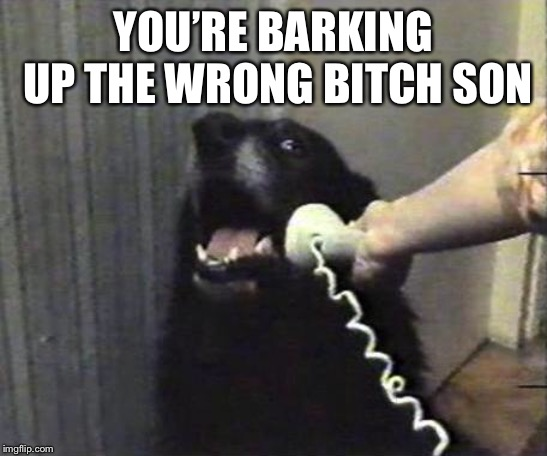 Yes this is dog | YOU'RE BARKING UP THE WRONG B**CH SON | image tagged in yes this is dog | made w/ Imgflip meme maker