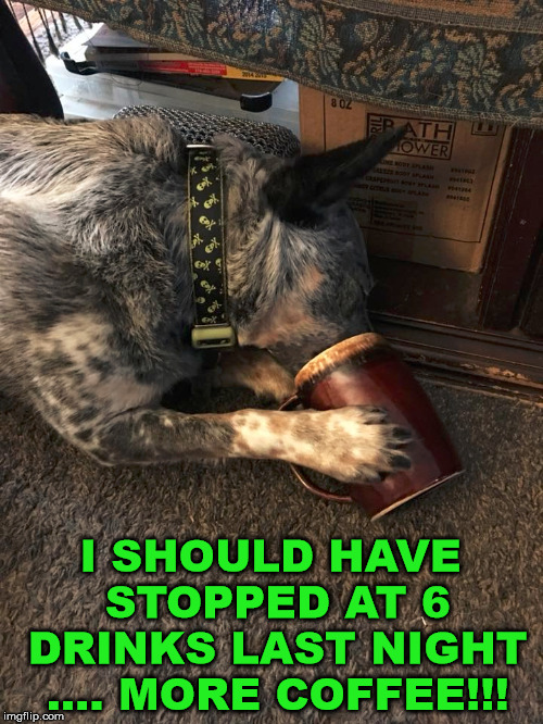 We can all relate | I SHOULD HAVE STOPPED AT 6 DRINKS LAST NIGHT .... MORE COFFEE!!! | image tagged in coffee,dog,dog meme,dog week,funny,doggo week | made w/ Imgflip meme maker