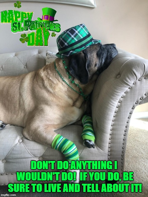 Happy St. Patrick's Day!! | DON'T DO ANYTHING I WOULDN'T DO!  IF YOU DO, BE SURE TO LIVE AND TELL ABOUT IT! | image tagged in st patrick's day,dog,funny dog,hangover,mastif,drunk | made w/ Imgflip meme maker