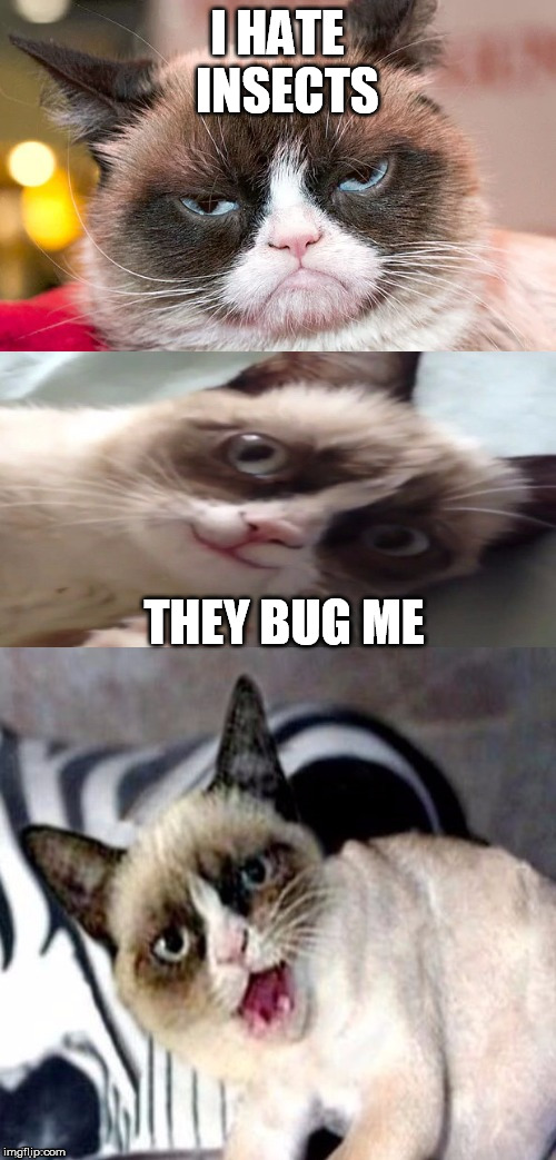 Bad Pun Grumpy Cat | I HATE  INSECTS THEY BUG ME | image tagged in bad pun grumpy cat | made w/ Imgflip meme maker
