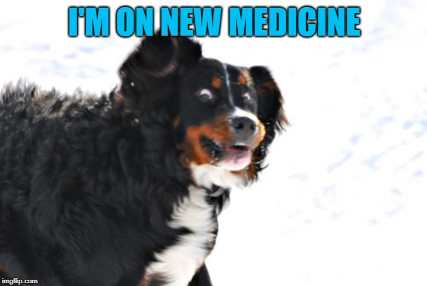 Crazy Dawg Meme | I'M ON NEW MEDICINE | image tagged in memes,crazy dawg | made w/ Imgflip meme maker