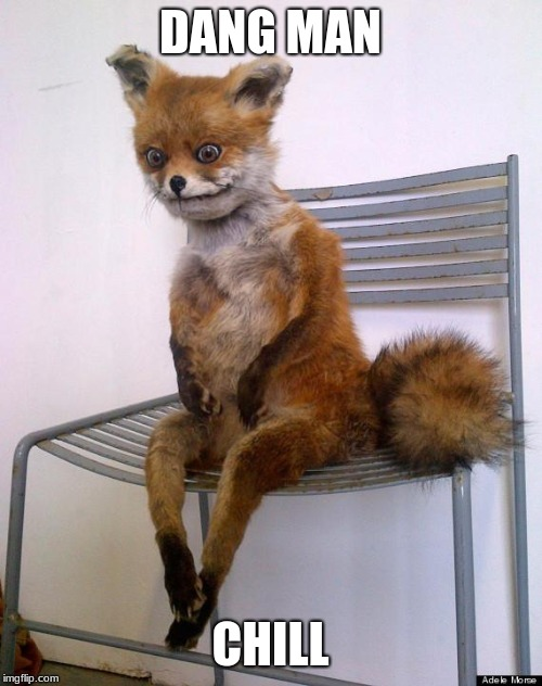 frightened fox | DANG MAN CHILL | image tagged in frightened fox | made w/ Imgflip meme maker