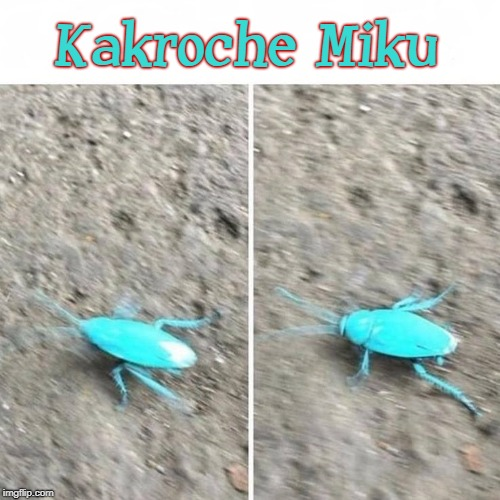 Kakroche Miku | Kakroche Miku | image tagged in hatsune miku,anime,vocaloid,cockroach,funny,bugs | made w/ Imgflip meme maker