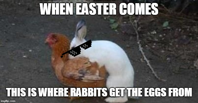 Easter eggs | WHEN EASTER COMES THIS IS WHERE RABBITS GET THE EGGS FROM | image tagged in easter eggs | made w/ Imgflip meme maker