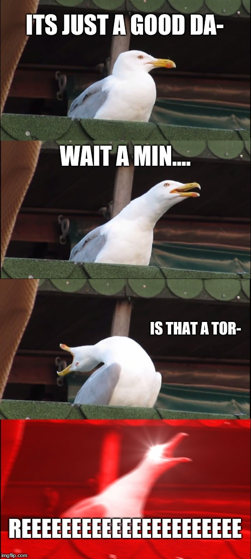 Inhaling Seagull Meme | ITS JUST A GOOD DA- WAIT A MIN.... IS THAT A TOR- REEEEEEEEEEEEEEEEEEEEEE | image tagged in memes,inhaling seagull | made w/ Imgflip meme maker