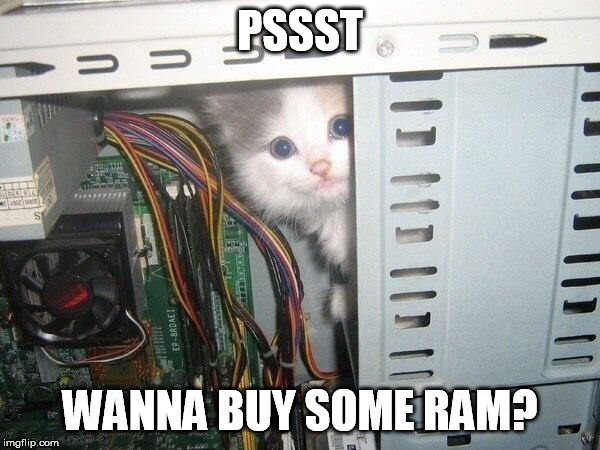 Hacker cat |  PSSST; WANNA BUY SOME RAM? | image tagged in computer,cat,ram,dealer | made w/ Imgflip meme maker