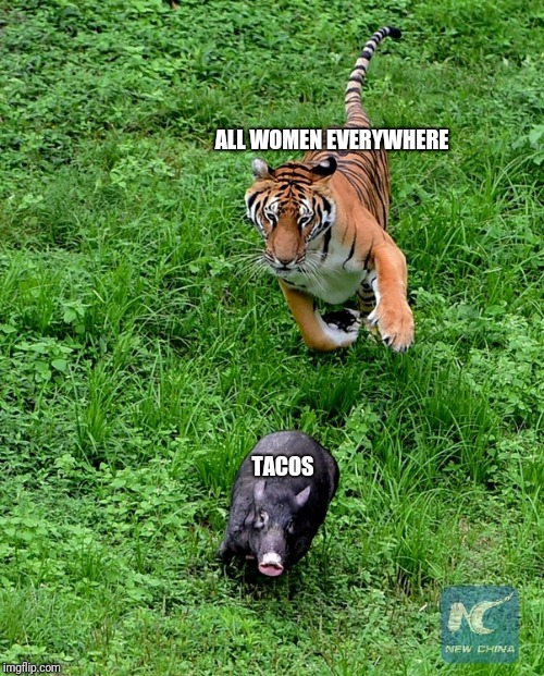 ALL WOMEN EVERYWHERE TACOS | image tagged in taco tuesday,tacos,taco,taco bell | made w/ Imgflip meme maker