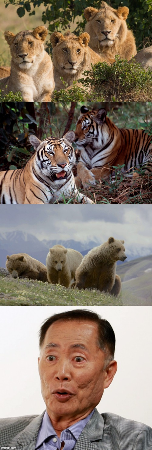 No caption necessary. | image tagged in lions,tigers,bears,oh my | made w/ Imgflip meme maker