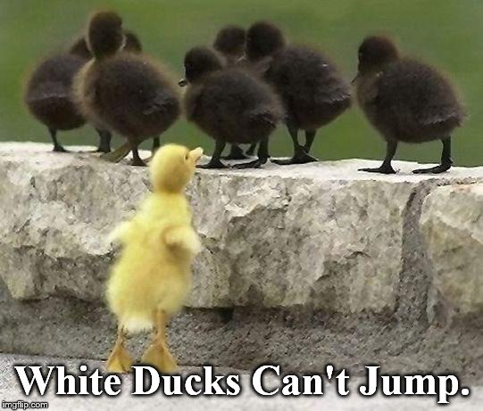 Sorry, but that's just the way it is. |  White Ducks Can't Jump. | image tagged in in the hood | made w/ Imgflip meme maker