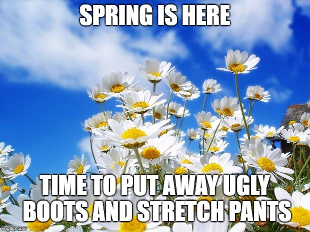 spring daisy flowers | SPRING IS HERE TIME TO PUT AWAY UGLY BOOTS AND STRETCH PANTS | image tagged in spring daisy flowers | made w/ Imgflip meme maker