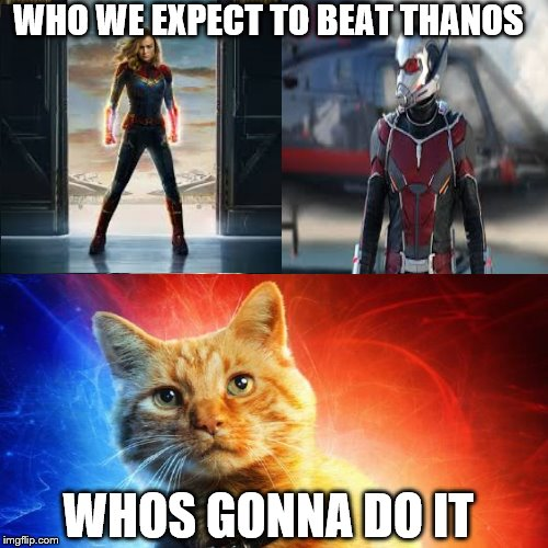 WHO WE EXPECT TO BEAT THANOS WHOS GONNA DO IT | image tagged in marvel,antman,goose,captain marvel,avengers endgame | made w/ Imgflip meme maker