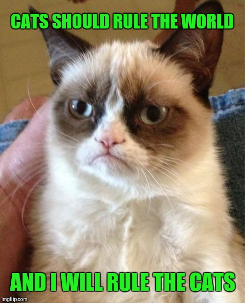 Grumpy Cat Meme | CATS SHOULD RULE THE WORLD AND I WILL RULE THE CATS | image tagged in memes,grumpy cat | made w/ Imgflip meme maker