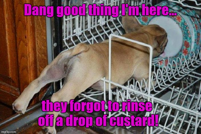 Pup in dishwasher | Dang good thing I'm here... they forgot to rinse off a drop of custard! | image tagged in pup in dishwasher,cute puppies | made w/ Imgflip meme maker