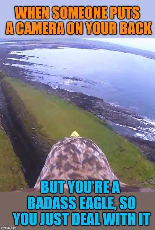 Badass Eagle | WHEN SOMEONE PUTS A CAMERA ON YOUR BACK BUT YOU'RE A BADASS EAGLE, SO YOU JUST DEAL WITH IT | image tagged in badass,eagle,flying,camera,cool,scenery | made w/ Imgflip meme maker