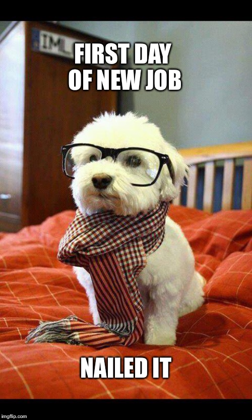 Intelligent Dog Meme | FIRST DAY OF NEW JOB NAILED IT | image tagged in memes,intelligent dog | made w/ Imgflip meme maker