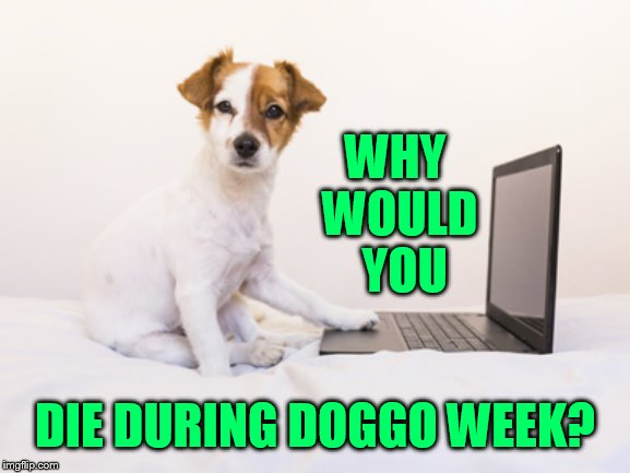 WHY WOULD  YOU DIE DURING DOGGO WEEK? | made w/ Imgflip meme maker