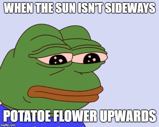 Pepe the Frog |  WHEN THE SUN ISN'T SIDEWAYS; POTATOE FLOWER UPWARDS | image tagged in pepe the frog | made w/ Imgflip meme maker