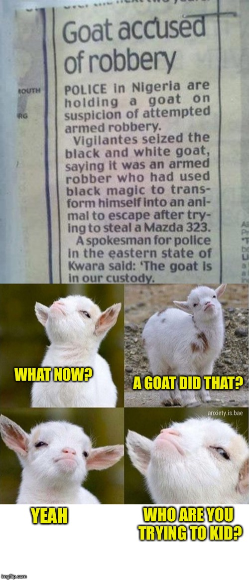 When it comes to headlines, this is up there with the GOAT | WHAT NOW? A GOAT DID THAT? WHO ARE YOU TRYING TO KID? YEAH | image tagged in memes,newspaper,headlines,goats,robbery,seriously face | made w/ Imgflip meme maker