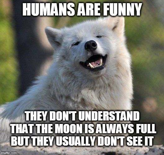 supersecretwolf | HUMANS ARE FUNNY THEY DON'T UNDERSTAND THAT THE MOON IS ALWAYS FULL BUT THEY USUALLY DON'T SEE IT | image tagged in supersecretwolf | made w/ Imgflip meme maker