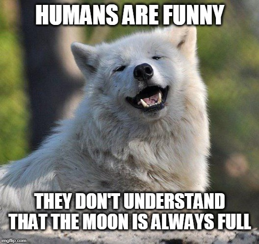 supersecretwolf | HUMANS ARE FUNNY THEY DON'T UNDERSTAND THAT THE MOON IS ALWAYS FULL | image tagged in supersecretwolf | made w/ Imgflip meme maker