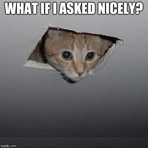 Ceiling Cat Meme | WHAT IF I ASKED NICELY? | image tagged in memes,ceiling cat | made w/ Imgflip meme maker