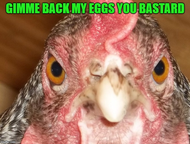 GIMME BACK MY EGGS YOU BASTARD | made w/ Imgflip meme maker