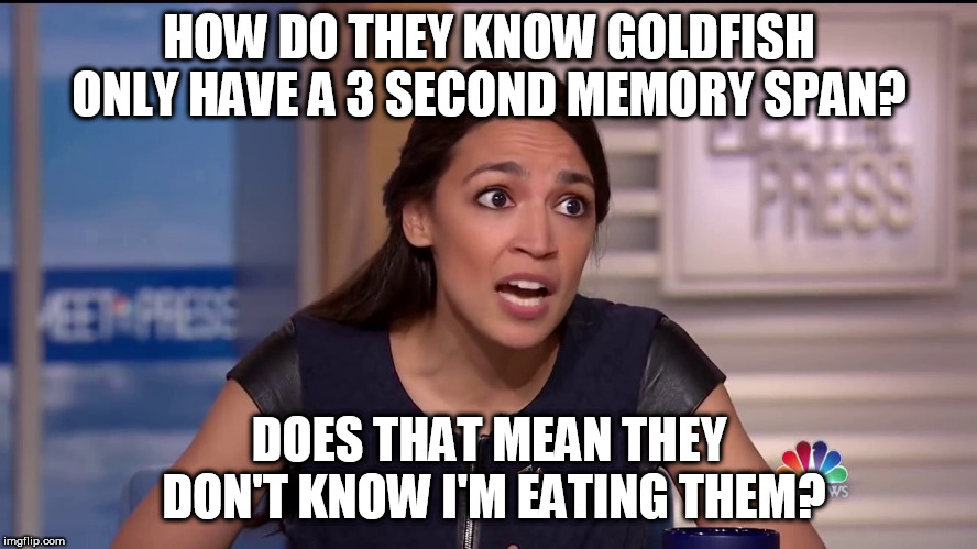 AOC Goldfish | HOW DO THEY KNOW GOLDFISH ONLY HAVE A 3 SECOND MEMORY SPAN? DOES THAT MEAN THEY DON'T KNOW I'M EATING THEM? | image tagged in aoc,alexandria osacio cortez | made w/ Imgflip meme maker