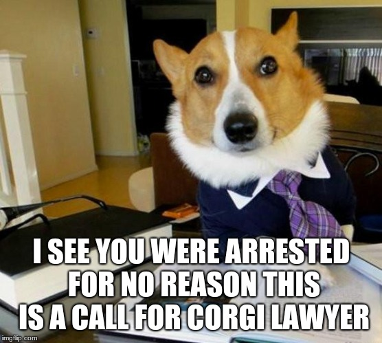 Lawyer Corgi Dog | I SEE YOU WERE ARRESTED FOR NO REASON THIS IS A CALL FOR CORGI LAWYER | image tagged in lawyer corgi dog | made w/ Imgflip meme maker