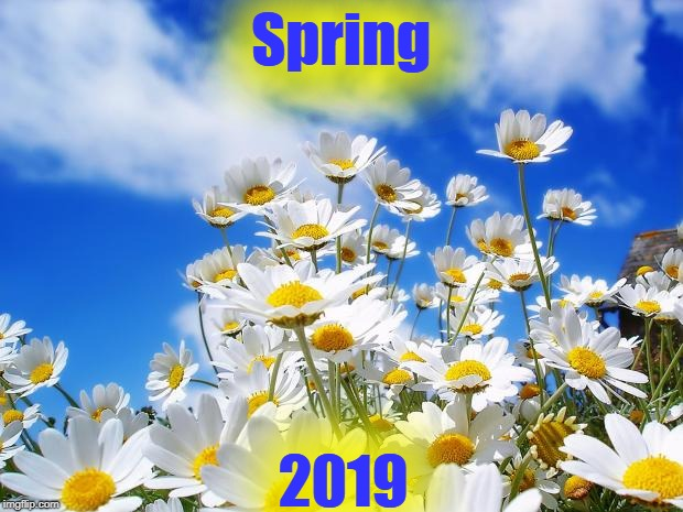 spring daisy flowers | Spring 2019 | image tagged in spring daisy flowers | made w/ Imgflip meme maker
