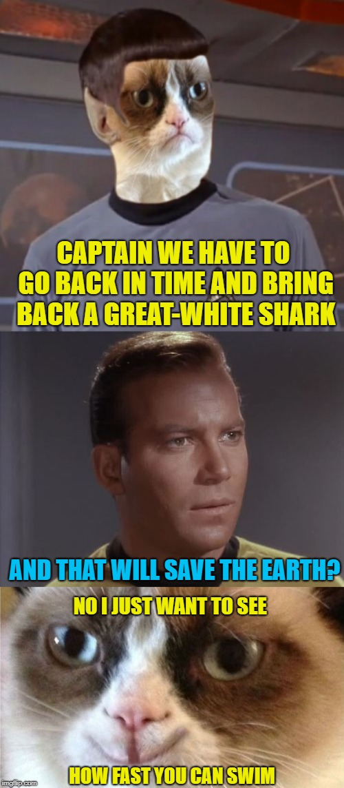 Grump Trek IV | CAPTAIN WE HAVE TO GO BACK IN TIME AND BRING BACK A GREAT-WHITE SHARK AND THAT WILL SAVE THE EARTH? NO I JUST WANT TO SEE HOW FAST YOU CAN S | image tagged in funny memes,grumpy cat,cat,star trek,star trek spock | made w/ Imgflip meme maker