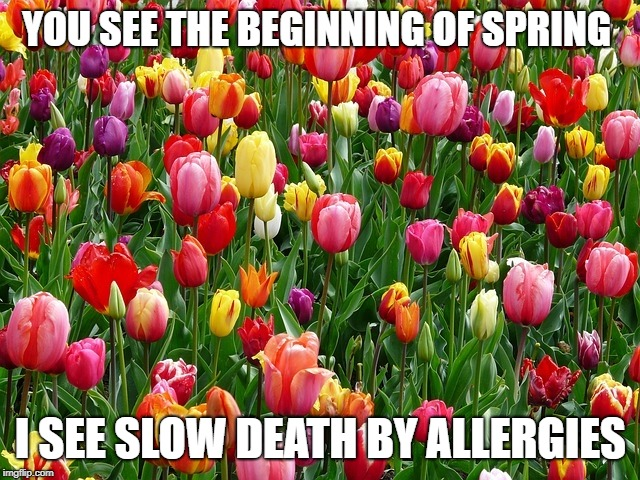 tulips | YOU SEE THE BEGINNING OF SPRING I SEE SLOW DEATH BY ALLERGIES | image tagged in tulips | made w/ Imgflip meme maker