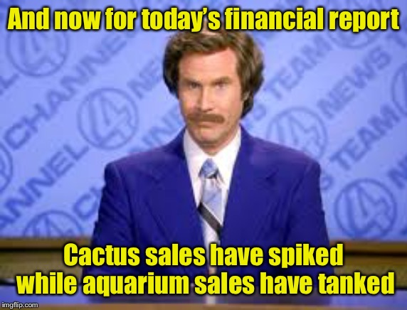 Today's financial report |  And now for today's financial report; Cactus sales have spiked while aquarium sales have tanked | image tagged in anchor man,finance,puns | made w/ Imgflip meme maker