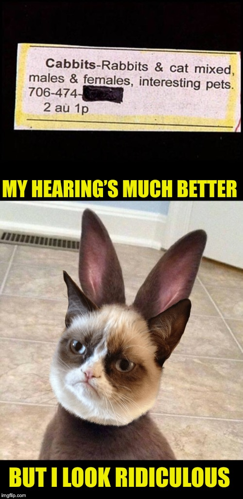 I wonder what PETA would make of this? It's put the Cabbit amongst the pigeons  | MY HEARING'S MUCH BETTER BUT I LOOK RIDICULOUS | image tagged in really rabbit,grumpy cat,remix,funny,pets,cabbit | made w/ Imgflip meme maker