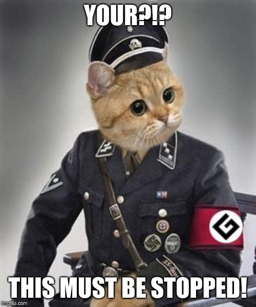 Grammar Nazi Cat | YOUR?!? THIS MUST BE STOPPED! | image tagged in grammar nazi cat | made w/ Imgflip meme maker