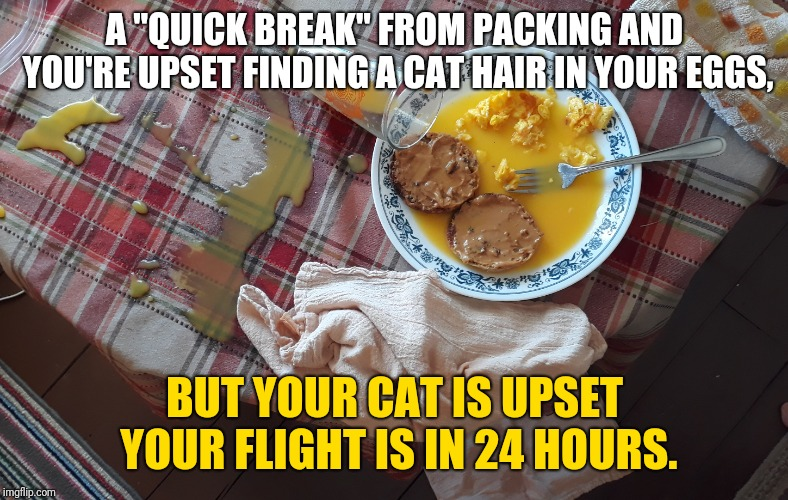 "Breakfast Cat | A ""QUICK BREAK"" FROM PACKING AND YOU'RE UPSET FINDING A CAT HAIR IN YOUR EGGS, BUT YOUR CAT IS UPSET YOUR FLIGHT IS IN 24 HOURS. 