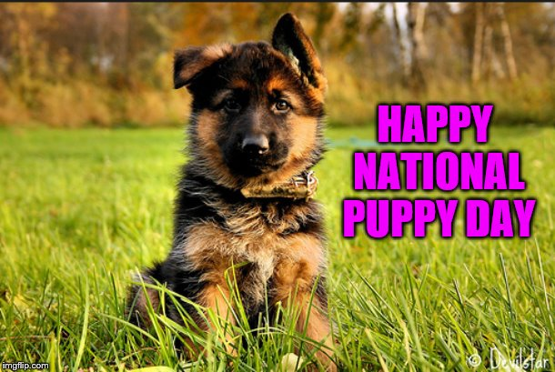 HAPPY NATIONAL PUPPY DAY | image tagged in puppy,german shepherd | made w/ Imgflip meme maker