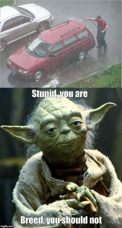 Stupid, you are Breed, you should not | image tagged in memes,star wars yoda,redundant carwash | made w/ Imgflip meme maker